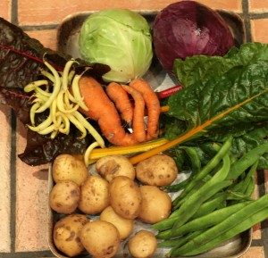 Red & white cabbage, chards, carrots, yellow french beans, runner beans, potatoes