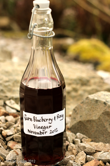 Blues and bays made into vinegar using kombucha