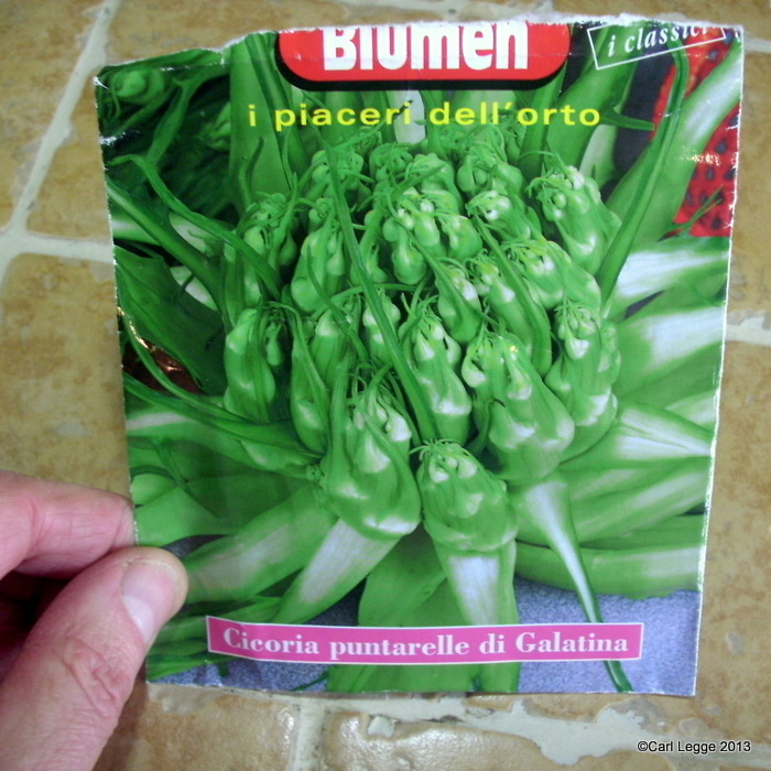 Puntarelle seed packet
