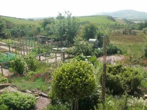 Carl's garden 2