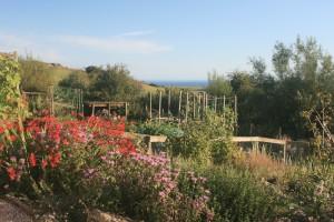 Carl's Garden