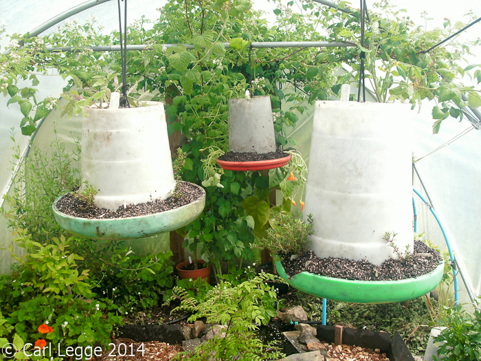 Poultry feeder hanging baskets
