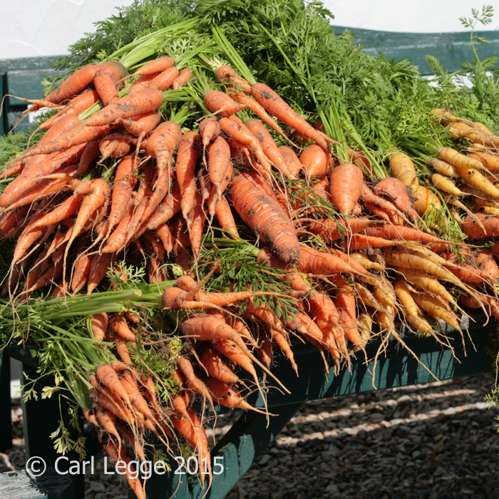 Carrots a large bunch